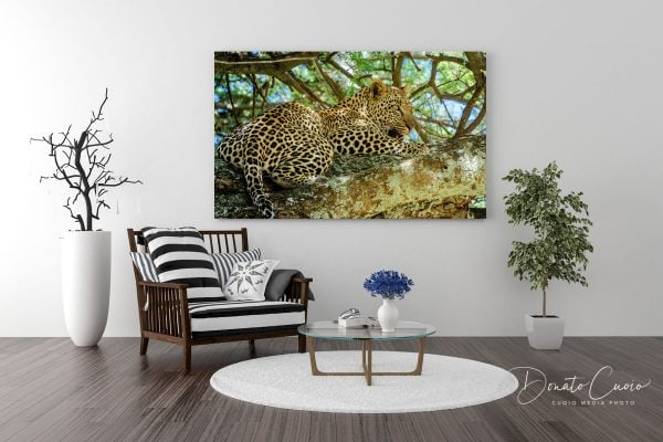 Living Room Leopard - After Lunch